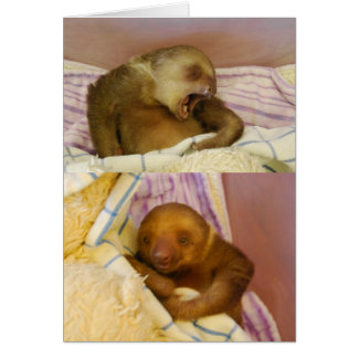 Animal Baby Sloth Cuteness Greeting Card