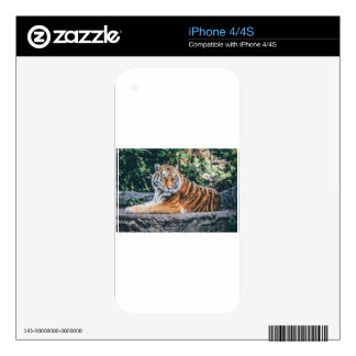 Animal Big Cat Safari Tiger Wild Cat Wildlife Zoo Skin For The iPhone 4
