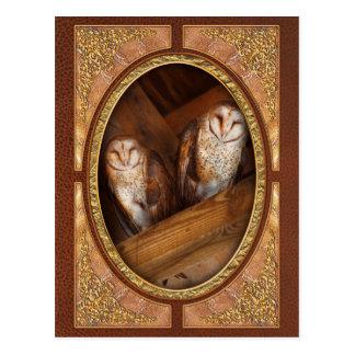 Animal - Bird - A couple of barn owls Postcard