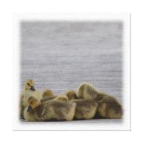 Animal Bird Canada Geese Canvas Print
