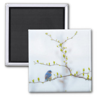 Animal Bird Eastern Bluebird 2 Inch Square Magnet