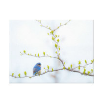 Animal Bird Eastern Bluebird Canvas Print