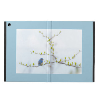 Animal Bird Eastern Bluebird Case For iPad Air