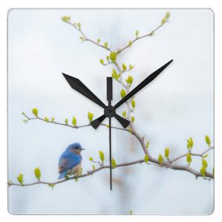 Animal Bird Eastern Bluebird Square Wall Clock