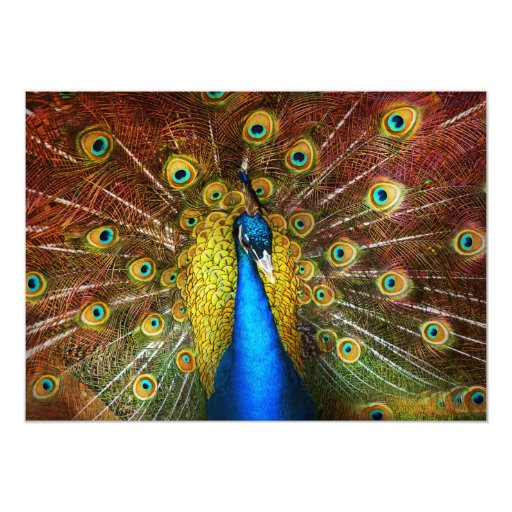 Animal - Bird - Peacock proud Card