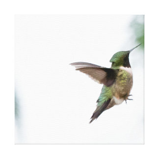 Animal Bird Ruby-throated Hummingbird Canvas Print