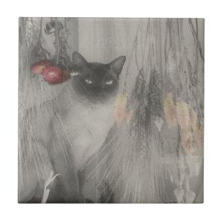 Animal blanco y negro del gato siamés azulejo