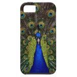 Animal bonito femenino brillante de la naturaleza iPhone 5 carcasa