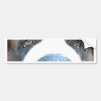 Animal Bumper Sticker