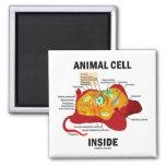 Animal Cell Inside (Eukaryote Cell Biology) Fridge Magnets