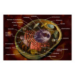Animal cell poster
