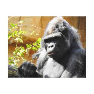 Animal Collection - Focused Gorilla Canvas Print