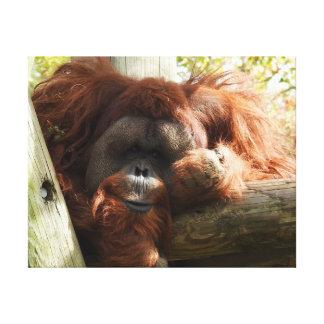 Animal Collection - Red Orangoutang Canvas Print