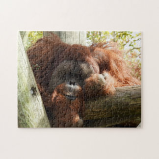 Animal Collection - Red Orangutan Jigsaw Puzzle