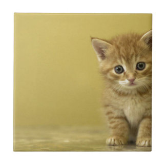 Animal - Curious Baby Kitten Ceramic Tile