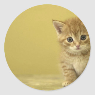 Animal - Curious Baby Kitten Classic Round Sticker