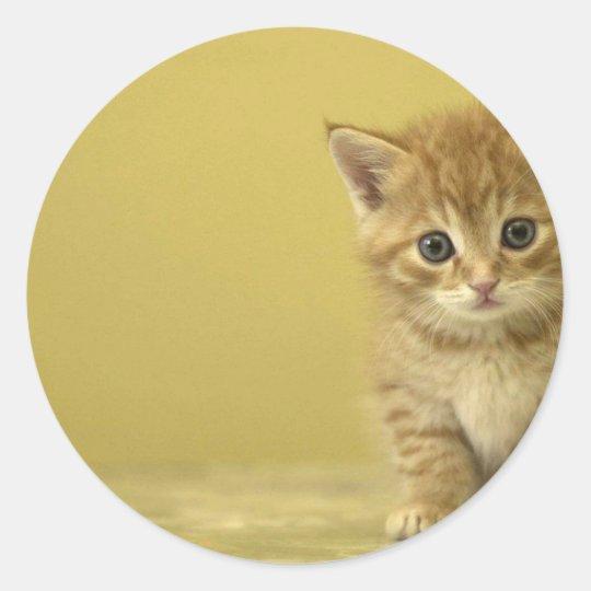 Animal - Curious Baby Kitten Classic Round Sticker