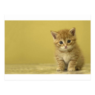Animal - Curious Baby Kitten Postcard