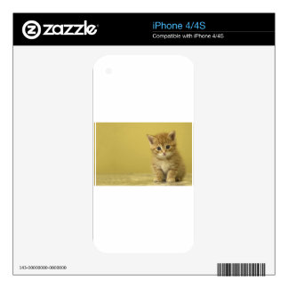 Animal - Curious Baby Kitten iPhone 4S Skins