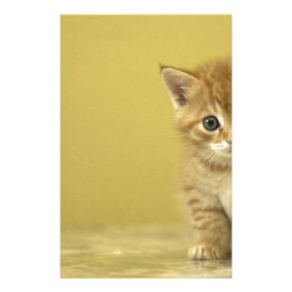 Animal - Curious Baby Kitten Stationery