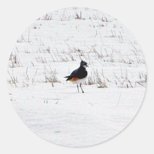 Animal de la avefría etiquetas redondas