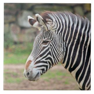 Animal de la cebra azulejo cuadrado grande