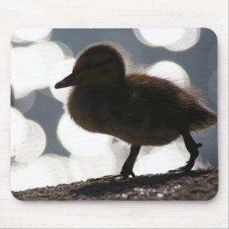 Animal de la fauna de los anadones del pato del mouse pads