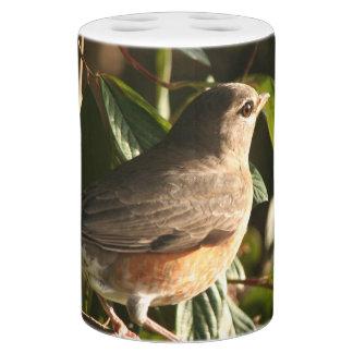 Animal de la fauna del pájaro de Redbreast del Jaboneras