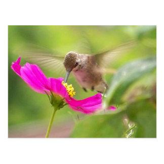 Animal de la fauna del pájaro del colibrí floral postal