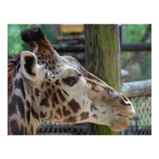 """animal de la jirafa que mira la fauna principal folleto 8.5"""" x 11"""""""