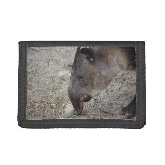 animal de la roca el oler del tapir