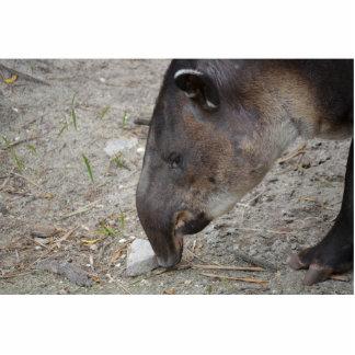 animal de la roca el oler del tapir escultura fotografica