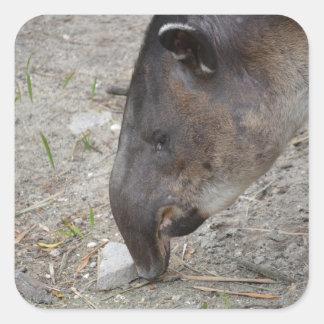 animal de la roca el oler del tapir calcomanías cuadradass personalizadas