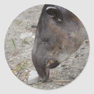 animal de la roca el oler del tapir pegatina redonda