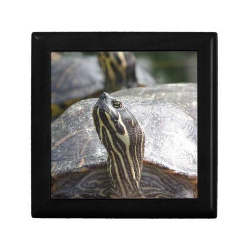 Animal de la tortuga joyero cuadrado pequeño