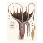 Animal de la vida marina del vintage, calamar del postal