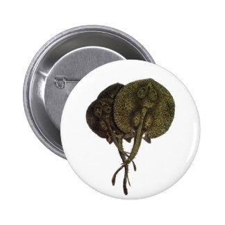 Animal de la vida marina del vintage, pastinacas pin redondo 5 cm