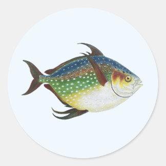 Animal de la vida marina del vintage, pescado pegatinas redondas