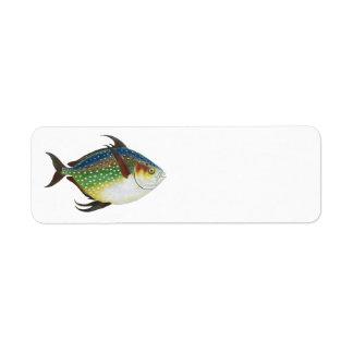 Animal de la vida marina del vintage, pescado trop etiqueta de remite