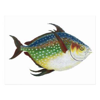 Animal de la vida marina del vintage, pescado trop postales