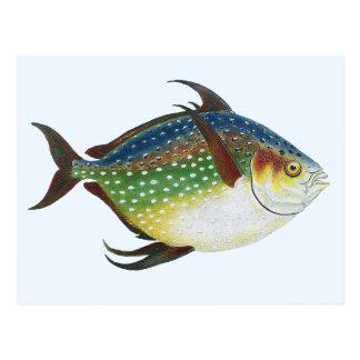 Animal de la vida marina del vintage, pescado trop tarjetas postales