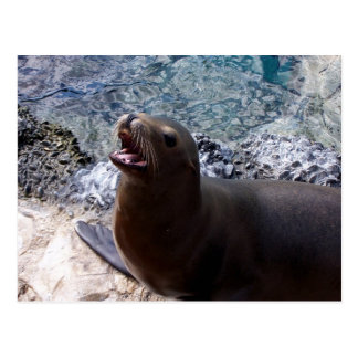 animal de mar lindo de la foto abierta de la boca postal