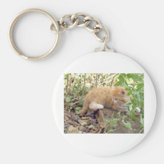 Animal de mascota del gato llaveros