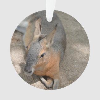 animal de reclinación animal del cavy patagón