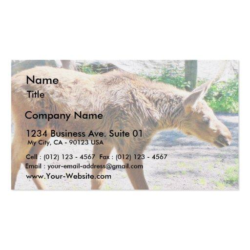 Animal del becerro de los alces plantilla de tarjeta de negocio