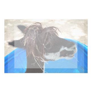 animal del campo azul unkept de la piscina del  papeleria