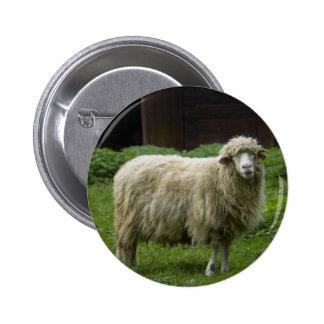 Animal del campo de las ovejas el   pin redondo 5 cm