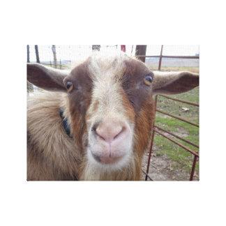 Animal del campo del corral de la cabra de Billy Impresiones En Lona Estiradas
