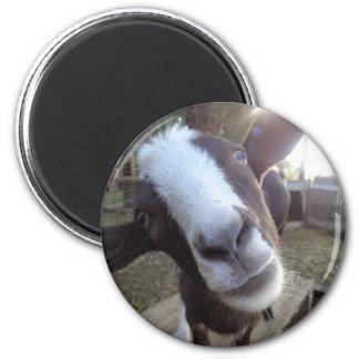 Animal del campo del corral de la cabra imán redondo 5 cm