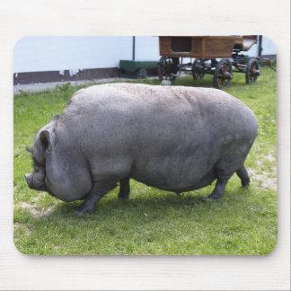 Animal del campo guarro gordo dulce del | tapetes de raton